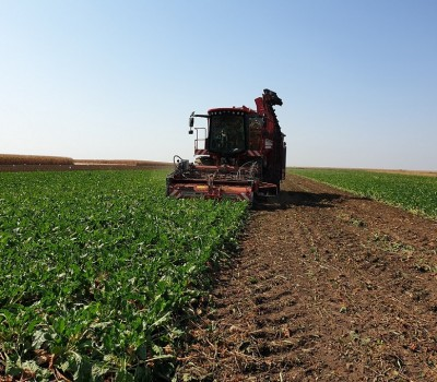 The Sugar Beet Processing Campaign is About to Begin
