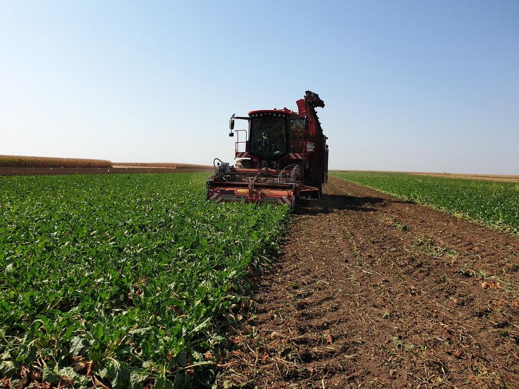 New Campaign of Sugar Beet Processing Has Begun